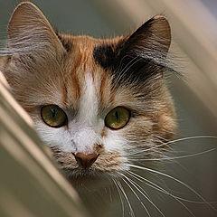 """фото """"Соседская кошка"""""""
