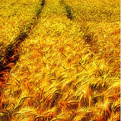"""фото """"the colors of crop"""""""