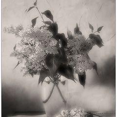 "photo ""Lilac dream"""