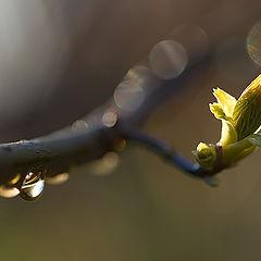 "photo ""After Rain"""