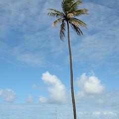 "photo ""Fortress Beach"""