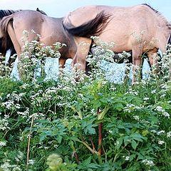 """фото """"horse summer"""""""