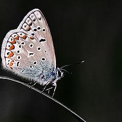 """фото """"Night Butterfly"""""""