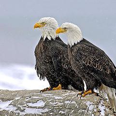 """фото """"Snowy Eagles"""""""
