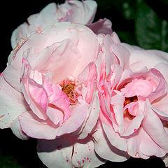 """album """"Flowers&Plants"""""""