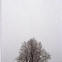 """фото """"Весенний снегопад"""""""