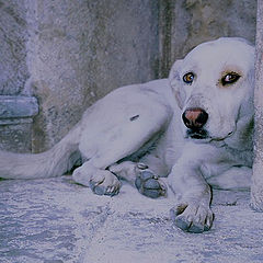 """фото """"Dog from Palermo"""""""