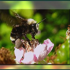 """фото """"bee"""""""