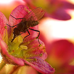 "фото ""Про цветы и мух."""
