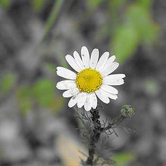 """фотоальбом """"Цветы"""""""