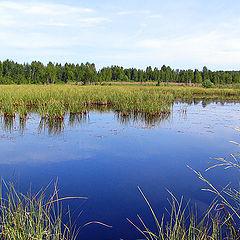 "photo ""Wood lake"""
