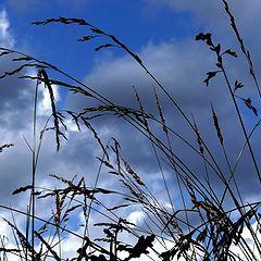 "фото ""Lying in the meadow..."""