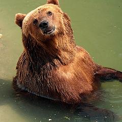 """фото """"Залезай, поплаваем!"""""""