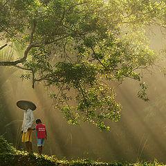 """фото """"""""Amazing Tree"""""""""""