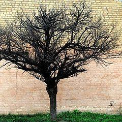 """фото """"Этюд с деревом"""""""