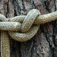 """фото """"knot"""""""