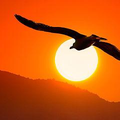 """фото """"Sundown"""""""
