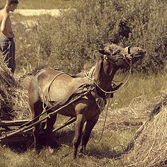 """photo """"Horse and hay"""""""