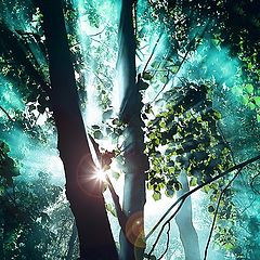 """photo """"Sunshine in the forest"""""""