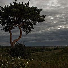 """фото """"Угрюмый пейзаж с одинокой сосной"""""""