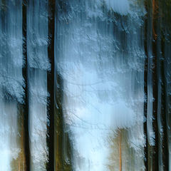 """фото """"FOREST ABSTRACTION"""""""