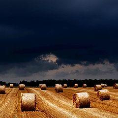 """photo """"Flanders fields"""""""