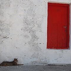 "фото ""Cat Next Door"""