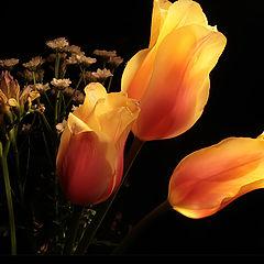"photo ""flowers -)"""