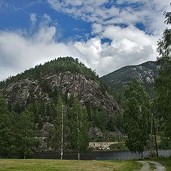 "photo ""Norwegian landscape of birches"""