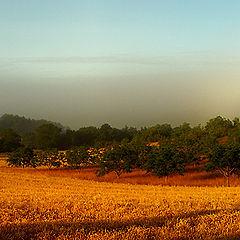 "фото ""Early Morning Light."""