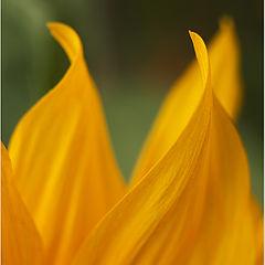 """фото """"Fire(flower abstraction)/Огонь(Цветочные абстракции)"""""""