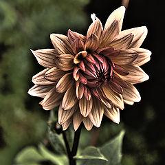 "фото ""DarkSide Garden"""