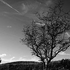 "фото ""Tree of Life"""