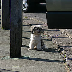 "фото ""Walk"""
