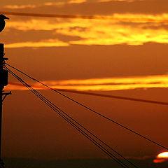 "фото ""Sunset on a scavenger"""