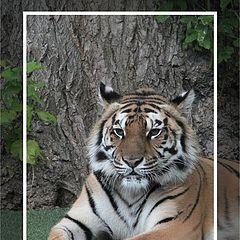 """фотоальбом """"Fauna"""""""