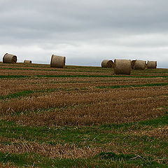 "фото ""After a haymaking"""