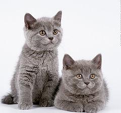 """фото """"Котята"""""""