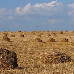 """фото """"Полеты над сеном"""""""