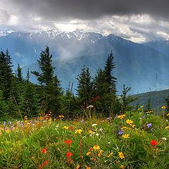 """фото """"Цветы, горы, тучи, свет..."""""""