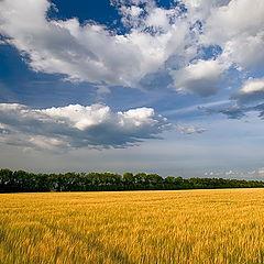 "фото ""Гармония. Небо и земля"""