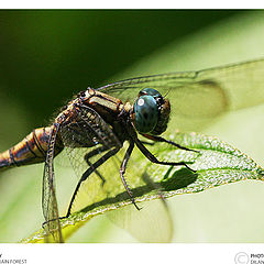 """photo """"The DragonFly"""""""