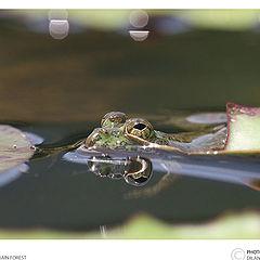 "photo ""Froggie"""
