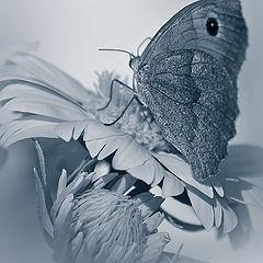 """фото """"В шелесте шелковых крыльев...."""""""