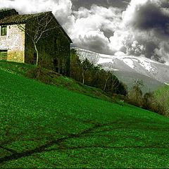 "фото ""Green and shadow"""