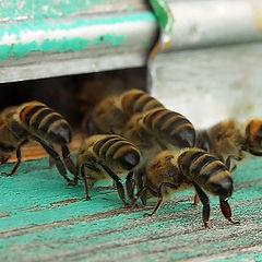 "фото ""Турбо-пчелы"""