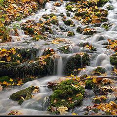 "photo ""Mood in fall"""