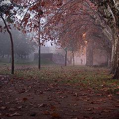 "фото ""through fog and autumn.."""