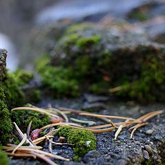 """фото """"Moss in the forest"""""""