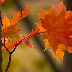 "фото ""Fall is ..."""